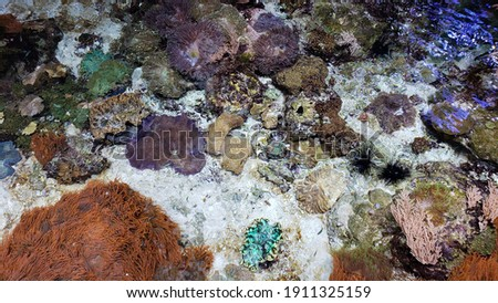 Colorful tide pools full of life Royalty-Free Stock Photo #1911325159