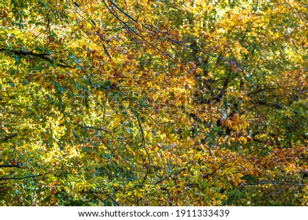 Autumn colours in the tree canopy, United Kingdom Royalty-Free Stock Photo #1911333439