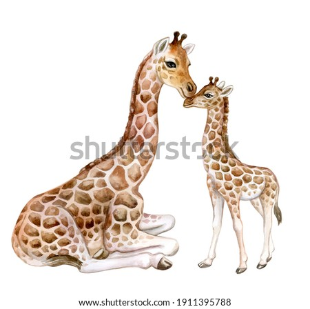 Giraffes. Mum with baby isolated on white background. Motherhood. Childhood. Watercolor. Illustration. Template. Clip-Art. Hand drawn