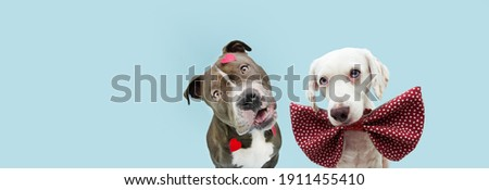 Banner dog love celebrating valentine's day with heart shape stickers and bow tie. Isolated on blue pastel background. Royalty-Free Stock Photo #1911455410
