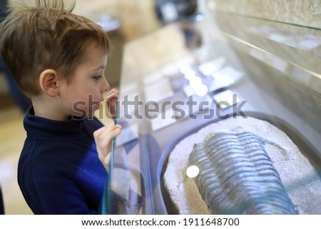 Child examines ancient petrified mollusk in museum Royalty-Free Stock Photo #1911648700