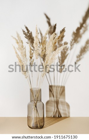 Pampas grass branches in vase on pastel neutral beige background with sun light and trendy shadow. Reeds foliage. Modern interior design concept Royalty-Free Stock Photo #1911675130