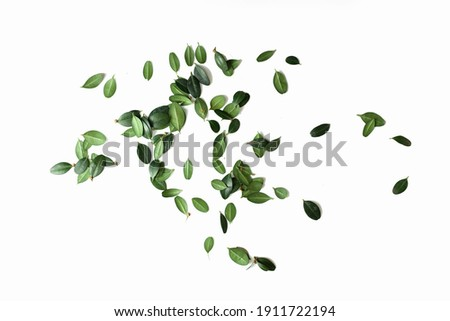 scattering of green leaves isolated on white background. horizontal