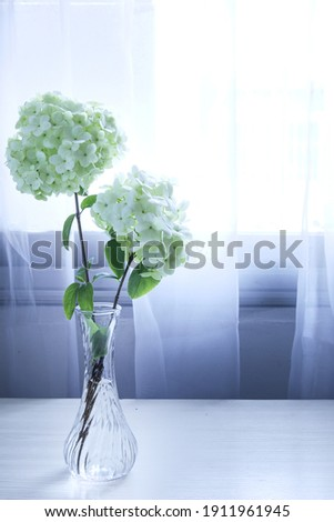 Two hydrangeas in a glass vase, white gauze curtain background, interior bouquet decoration, vertical picture