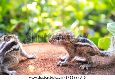 Small Squirrels lost in the wild, cute and adorable newborn orphan squirrel babies barely can walk and climb, three striped palm squirrels look for their mother squirrel in the bush,