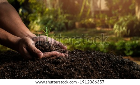 closeup hand of person holding abundance soil with young plant. Concept green world earth day Royalty-Free Stock Photo #1912066357