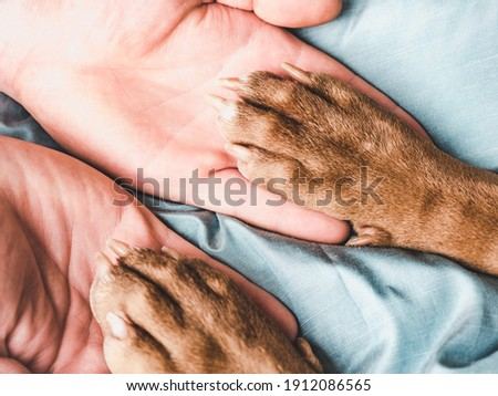 Male hands and paws of a puppy. Close-up, indoor, view from above. Concept of care, education, obedience training, raising pets Royalty-Free Stock Photo #1912086565