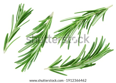 Rosemary twig and leaves isolated on white background. Collection Royalty-Free Stock Photo #1912366462