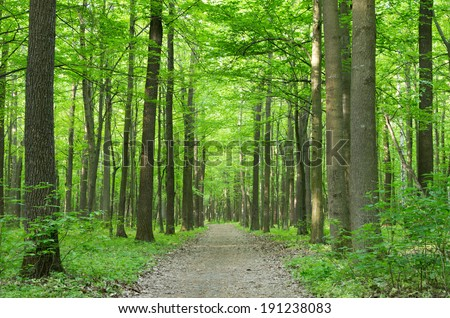 green trees background in forest #191238083