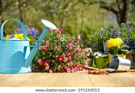 Outdoor gardening tools and flowers on old wood table  #191242013