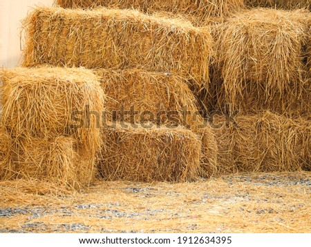 Haystack, a bale of hay group. Agriculture farm and farming symbol of harvest time with dry grass (hay),  hay pile of dried grass hay straw.  Royalty-Free Stock Photo #1912634395