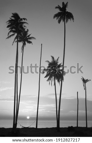 tropical beach during sunrise.. Beautiful nature landscape with Coconut Palm trees . black and white photography. soft and grain image.