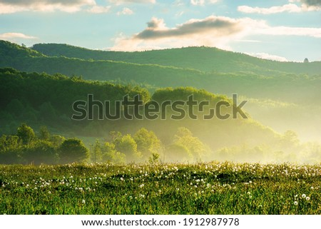 dandelion field in rural landscape at sunrise. beautiful nature scenery with blooming weeds in morning light. clouds on the sky above the distant mountain Royalty-Free Stock Photo #1912987978