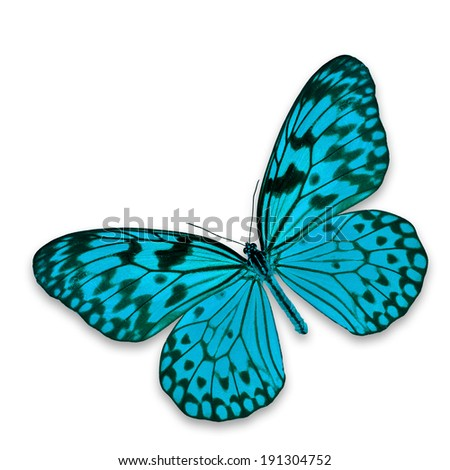 Blue butterfly flying isolated on white background. #191304752