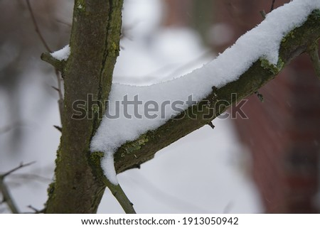 background pictures with snow in the nature or outside
