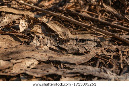 A picture of a brown grasshopper among some brown leaves.