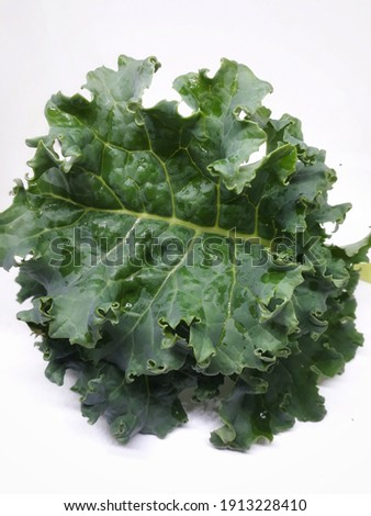 closeup curled kale leaf green  color on white background,vertical picture