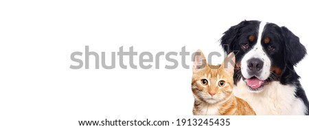 Beautiful cat and dog in front a white background Royalty-Free Stock Photo #1913245435