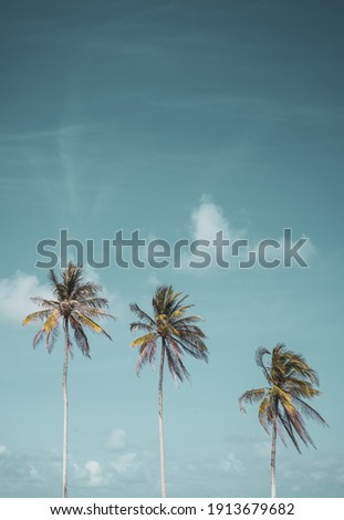 Tropical palm tree with blue sky and cloud abstract background. Summer vacation and nature travel adventure concept. Pastel tone filter effect color style. Royalty-Free Stock Photo #1913679682