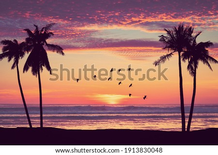 Silhouette palm tree at tropical beach with birds flying on sunset sky abstract background. Nature environment and travel freedom concept. Vintage tone filter effect color style. Royalty-Free Stock Photo #1913830048