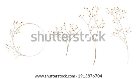 Limonium, wedding grass set stock vector illustration. Delicate elegant floral for an invitation. Cream color. Dry flowers in pastel colors isolated on a white background for invitation design. Royalty-Free Stock Photo #1913876704