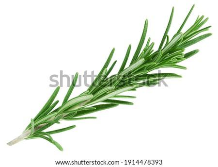 Rosemary twig isolated on white background            Royalty-Free Stock Photo #1914478393