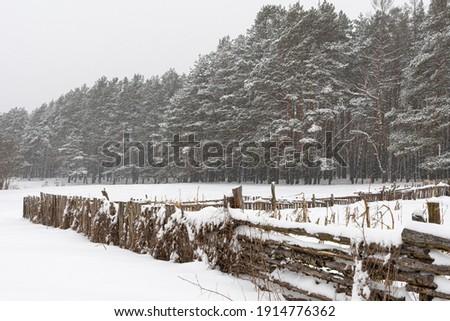 picture, big blizzard in winter snow