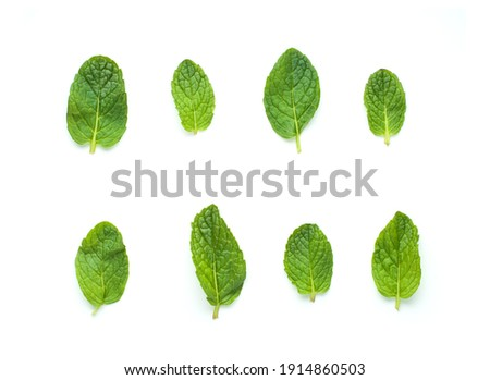 Peppermint leaves isolated on white background, top view Royalty-Free Stock Photo #1914860503