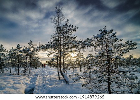 Fantastic evening landscape in a colorful sunlight. Dramatic wintry scene. National Park Carpathian, Ukraine, Europe. Beauty world. Retro style filter. Happy New Year. Snow forest Royalty-Free Stock Photo #1914879265