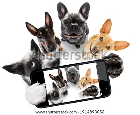team group row of dogs taking a selfie isolated on white background, smile and happy snapshot Royalty-Free Stock Photo #1914893056