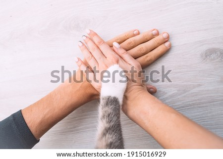 Couple or family hands and cat paw on the top. Human and the animal connection. People and pets friendship, togetherness and trust concept Royalty-Free Stock Photo #1915016929