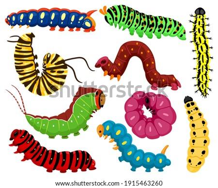 Cartoon caterpillars. Cute summer insects, spring colorful caterpillar. Pretty caterpillar mascots isolated vector illustration set. Caterpillar wildlife mascot, small maggot move
