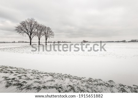 Dutch winter landscape with three bare tree silhouettes in a snowy field. The photo was taken in the province of North Brabant.