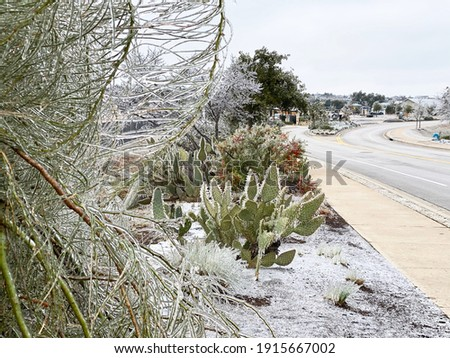 Winter storm in Austin Texas. Cactus in ice. Freezing rain. Winter scene. Natural disaster Royalty-Free Stock Photo #1915667002