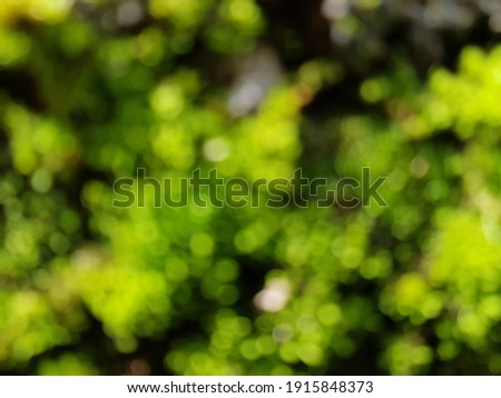 defocused grass, defocused moss, defocused plant, defocused trees, blur photos Royalty-Free Stock Photo #1915848373