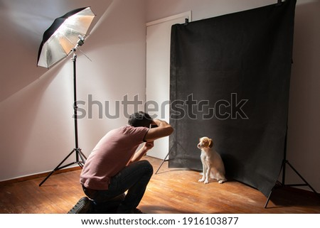 Dog photoshooting at the studio with all necessary equipment
