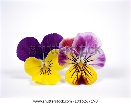 Colorful pansy flowers viola tricolor , wild pansy , pansies isolated on white background