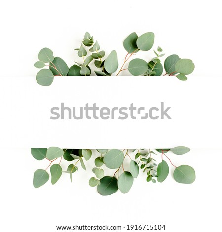 Green leaves eucalyptus isolated on white background. flat lay, top view Royalty-Free Stock Photo #1916715104