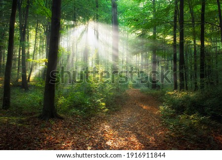 Beautiful morning in the forest Royalty-Free Stock Photo #1916911844