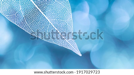 Beautiful white skeletonized leaf on light blue background with round bokeh. Expressive artistic image of beauty and purity of nature. Royalty-Free Stock Photo #1917029723