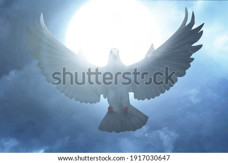 Pigeon flying with the night scene background Royalty-Free Stock Photo #1917030647