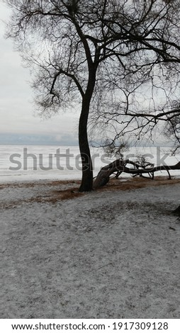 Two trees by the bay. Winter coast of the Gulf of Fink. Two trees stand separately without foliage. One grows up the second is inclined to the ground. In the distance ice of frozen water over the bay. Royalty-Free Stock Photo #1917309128