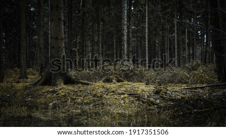 A tree stump in a spooky forest
