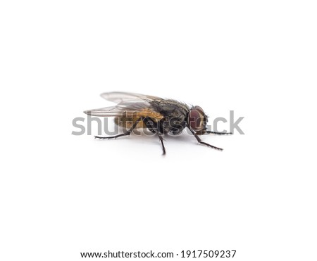 One little fly isolated on a white background. Royalty-Free Stock Photo #1917509237