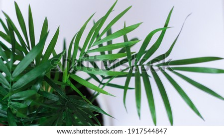 Abstract modern interior with green plant, wall background macro side view. A fresh green foliage under the sunlight on white background