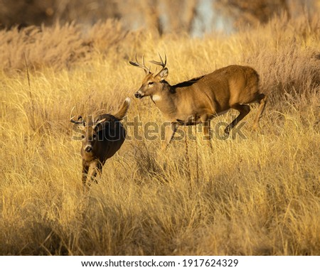 Whitetail Deer Trophy Buck in Fall Royalty-Free Stock Photo #1917624329