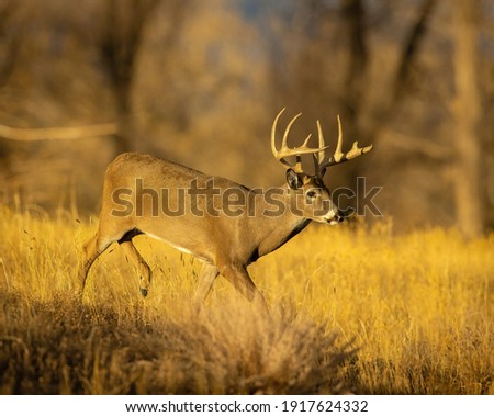 Whitetail Deer Trophy Buck in Fall Royalty-Free Stock Photo #1917624332
