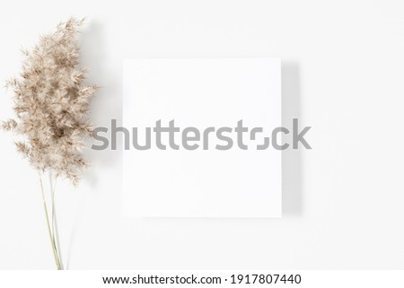White paper empty blank, dried grass decoration on white background. White square Invitation card mockup on white table. Flat lay, top view, copy space, mockup Royalty-Free Stock Photo #1917807440