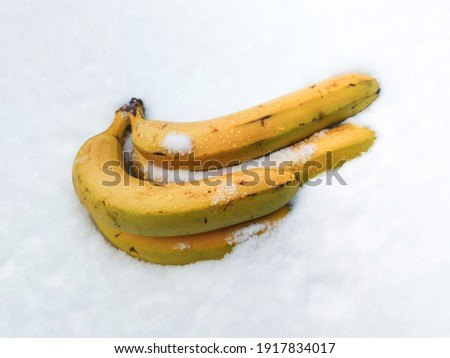 frozen bananas in the snow, tropical fruits in winter