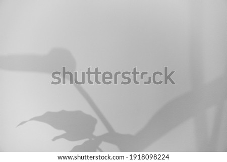 Shadow Overlay Textures on the White Wall